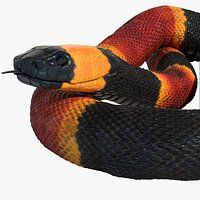Coral Snake Rigged Animated
