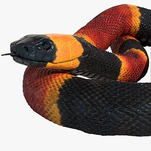 3D Coral Snake Rigged Animated model