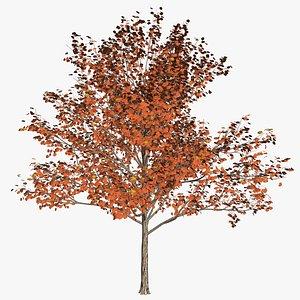 tree 24 preset materilas 3D model