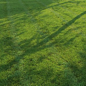 Cut grass V2 3D model