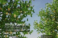 2020 XfrogPlants Fruit Trees Library