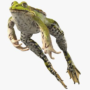 3D Frog Jumping Pose model