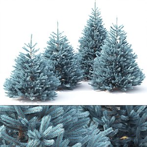 spruce tree nature 3D