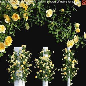 3D Rosa Climbing Golden Showers - rose 02
