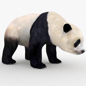 3D model panda bear