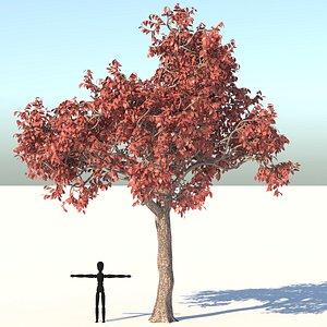 Acer Tree 3D model
