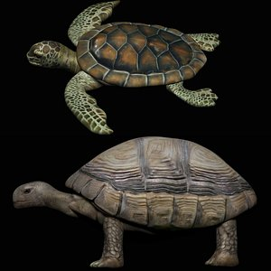 fully rigged low poly turtle tortoise collection 3D model