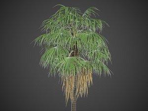 3D XfrogPlants Florida Thatch Palm - Thrinax Radiata