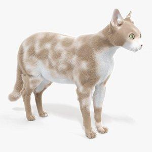 cat body static 3D model
