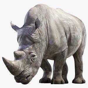 Big White Rhino Rigged 3D model