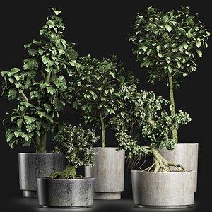 3D model exotic plants tree