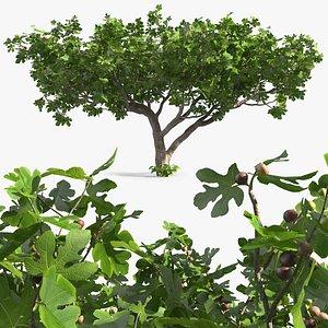 3D big fig tree fruits
