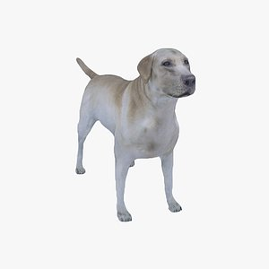 3D DogLabrador