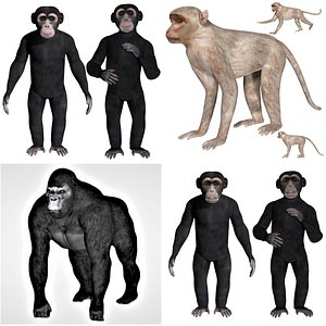 3D Rigged Primate Forest Animal Ape collection model