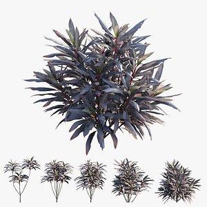 3D cordyline fruticosa plant set