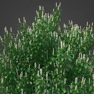 3D 2021 PBR Cherry Laurel Collection - Prunus Laurocerasus