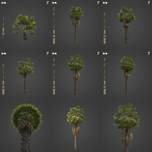 2021 PBR Chinese Windmill Palm Collection - Trachycarpus Fortunei 3D model
