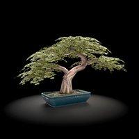 Bonzai Tree low poly model