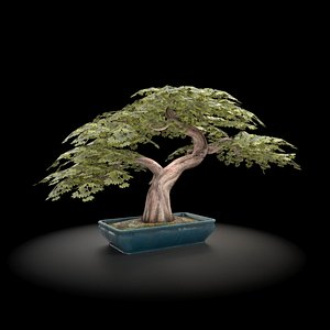 nature tree 3D