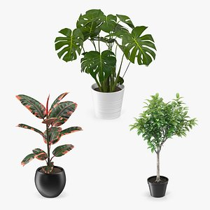 houseplants tropical plant 3D model