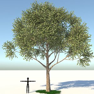 3D model apple tree grass