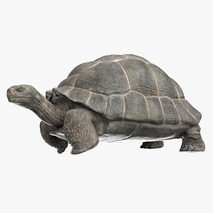 giant tortoise animation model
