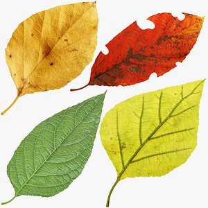 3D Birch Leaves Collection V1