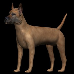 3D fully rigged low poly great dane