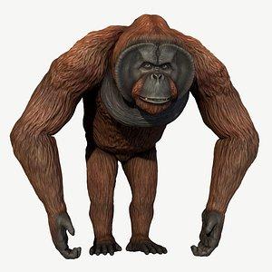 3D orangutan model
