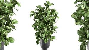3D model plants interior pots planter