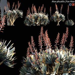 Aloe plicatilis 02 3D model