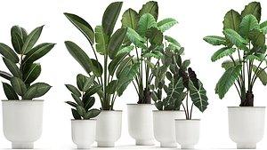 3D plants white pots model