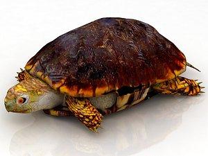 Hermann Turtle Tortoise 3D model