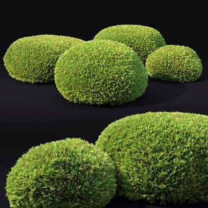 globe juniper juniperus 3D model