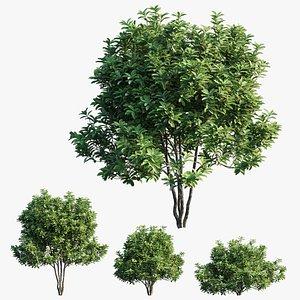 3D model plant set 22