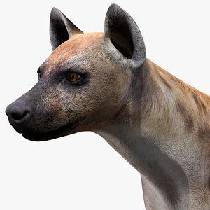 3D model Hyena Rigged for Modo