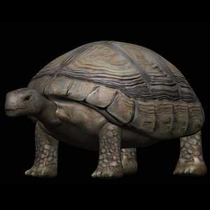 3D model fully rigged low poly tortoise
