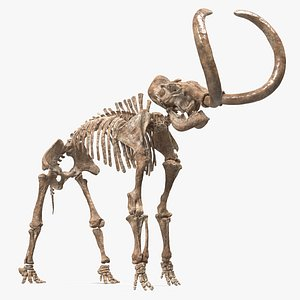 Mammoth Skeleton Old Bones Standing Pose 3D model