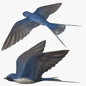 Rigged Swallow 3D model