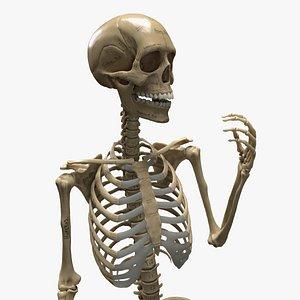 3D female skeleton rigged model