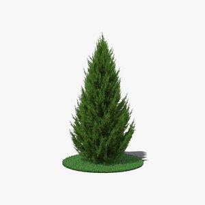 3D model conifer coniferous tree