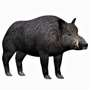 Fully rigged boar 3D model