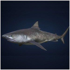 3D Tiger Shark - Game Ready