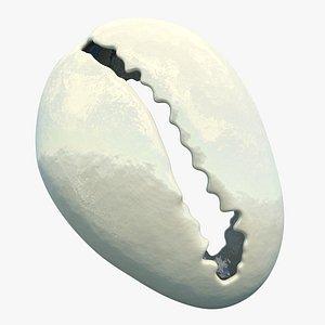 Cowrie Shell 3D model