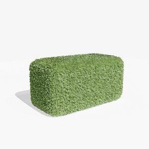 3D Buxus Hedge 01 model