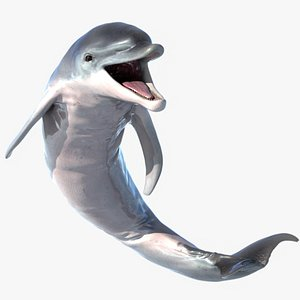3D dolphin animation