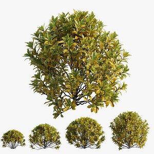 Croton plant set 13 model