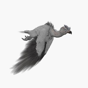 3D Vulture