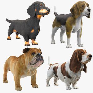 3D Dogs Collections VrayFur model