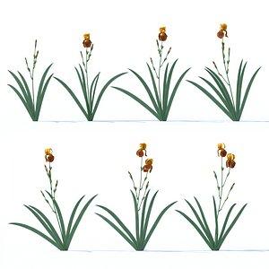 3D iris plant flower
